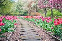 Růžová má schopnost navodit veselou náladu, červená dokáže povzbudit a vyburcovat energii