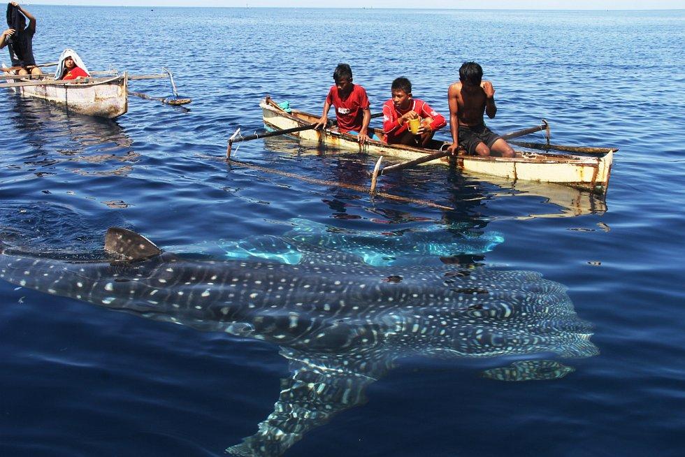 Polévka ze žraločích ploutví je pochoutkou, a to nejenom v asijských státech.
