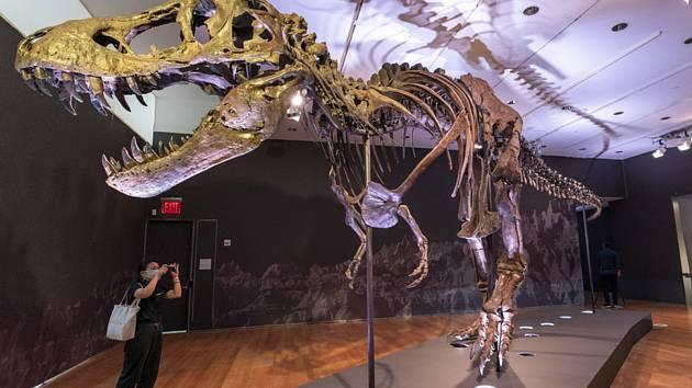 Kostra Tyrannosaura rexe vydražená 6. října v aukční síni Christies v New Yorku