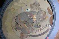 Mumie, jejímž výzkumem v turínském muzeu získal Buckleyho tým veškeré potřebné informace.