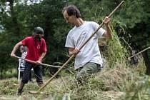 Ochránci přírody pomáhali 29. července v údolí říčky Olešenka u obce Rzy v podhůří Orlických hor s kosením orchidejových luk.