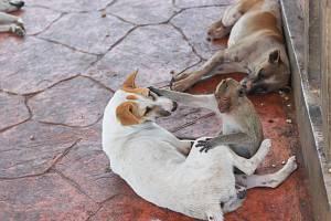 Soužití zvířat. Ilustrační foto