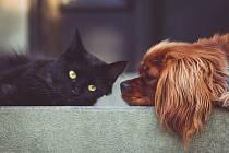 Kočka a pes - Ilustrační foto