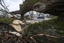 Strom spadlý na silnici kvůli silnému větru - ilustrační foto.