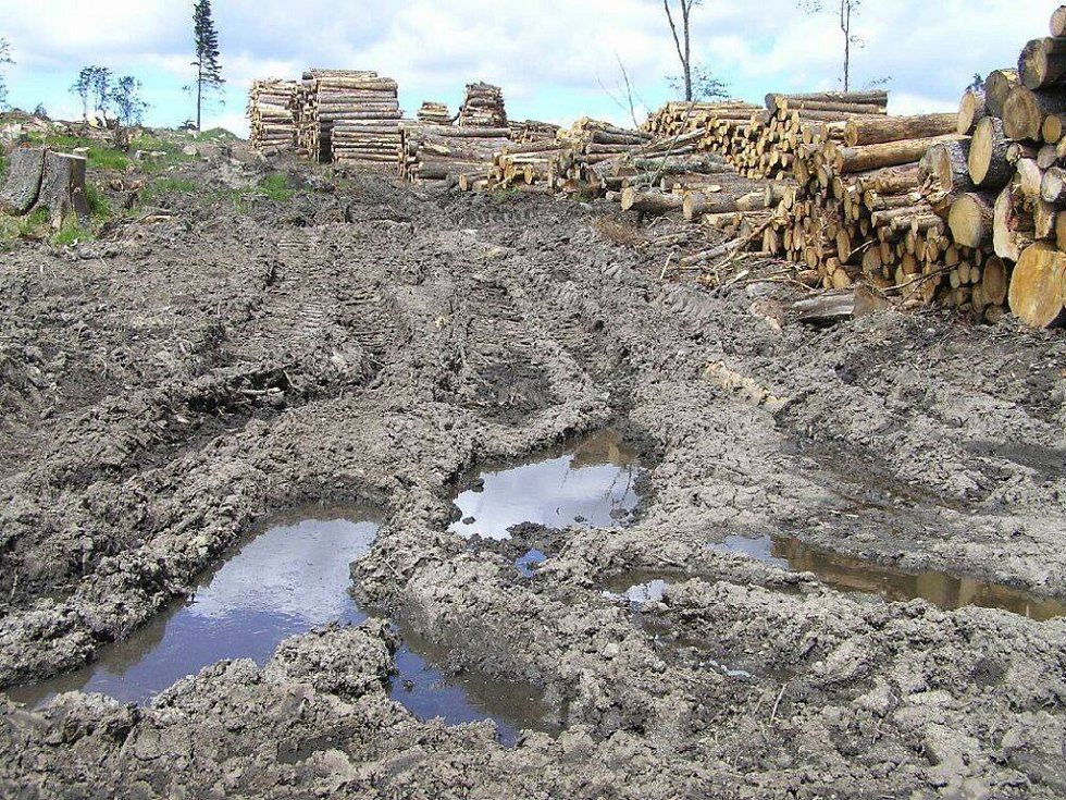 Lesy jsou ničeny těžbou a přejezdy těžkých strojů.