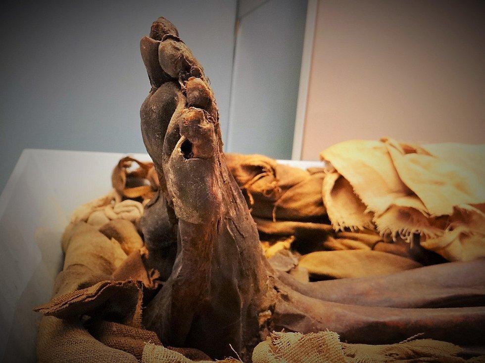 Mumie starověkého Egypťana z Britského muzea.