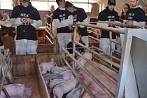Protest veganů na britské prasečí farmě.