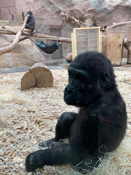 Pražská zoo stojí za návštěvu.