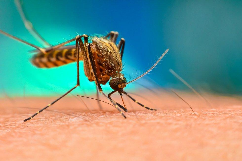 Pokud by se podařilo tento otravný hmyz zastavit, Světová zdravotnická organizace tvrdí, že by to ročně zachránilo kolem půl milionu životů.