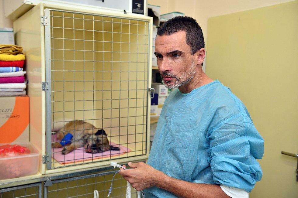 Roman Skala při operaci pejska na Veterinární klinice Na Hrádku v Praze