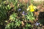 Jaro konečně přichází i k nám na chalupu.
