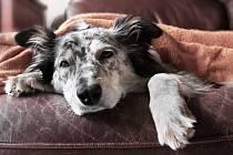 Koronavirová pandemie dopadá i na psychiku čtyřnohých mazlíčků