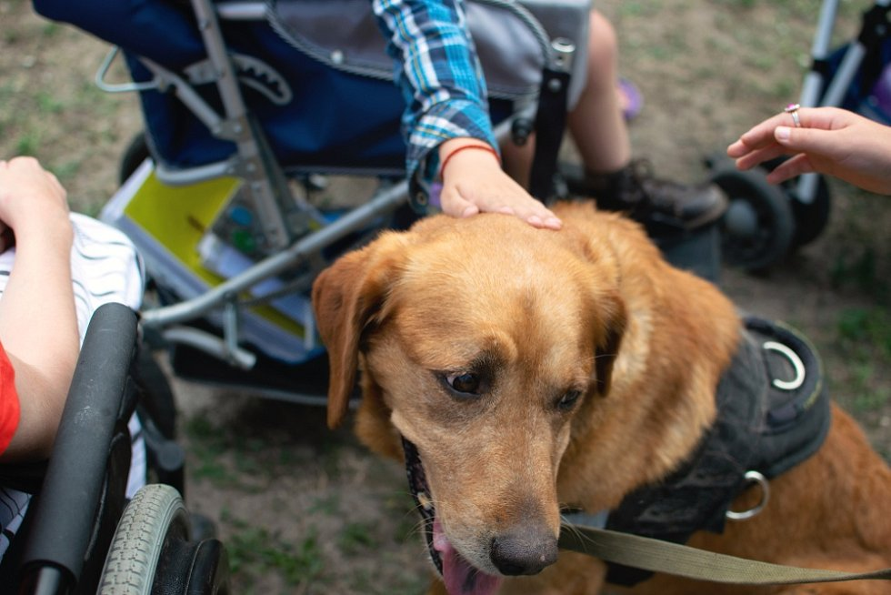 Pomůcka, vstupenka do svobodnějšího života, přítel. Tím vším je asistenční pes.