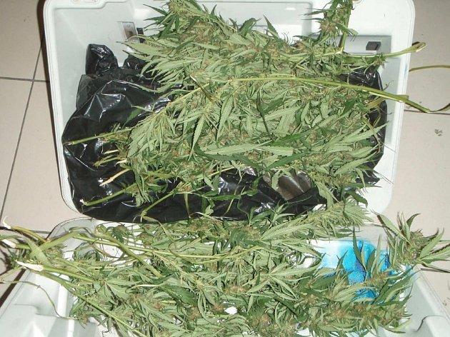 Muže s kufrem, ze kterého vyčnívala rostlina konopí, zadrželi v centru metropole pražští strážníci.