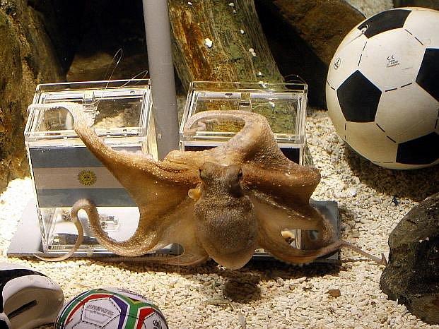 Chobotnice Paul by profi sízkaře strčila do kapsy. Potvrdí se to i ve finále MS.