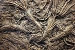 Zkamenělé lilijice z období druhohorní jury