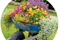 Pokud vaše kolečko už dosloužilo, zkuste ho osadit květinami