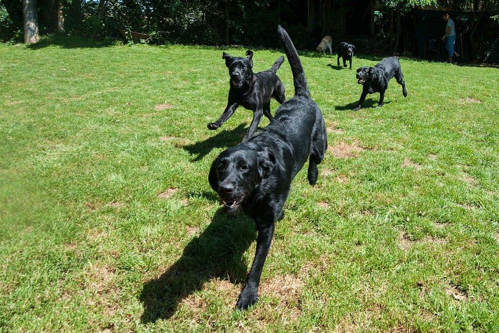 Chovná stanice BRI - COL v Oseku má momentálně na starosti celkem 12 asistenčních psů.
