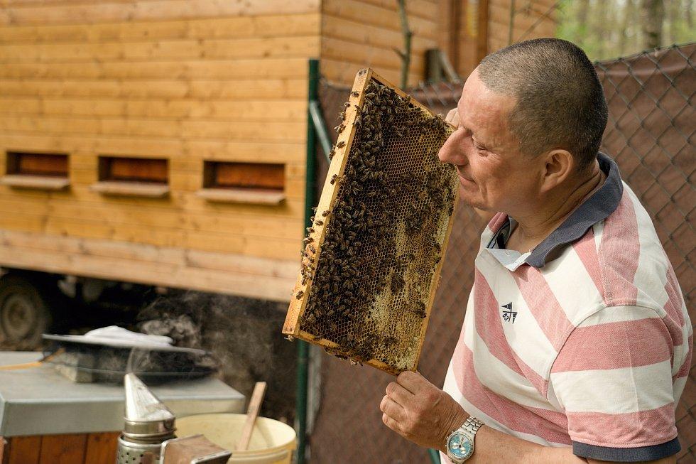 Jarní péče o včelstva v expozici brněnské zoo. Augustin Uváčik přidával do úlů nové čisté rámečky.