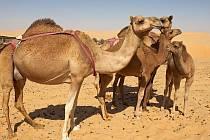 Výlety do pouště si nenechá ujít téměř žádný turista.