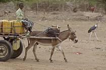 Městští činitelé poslali majitelům vozů tažených osly dopis, v němž jim oznámili, jakým způsobem musí nově bránit tomu, aby zvířecí výkaly nehyzdily silnici.