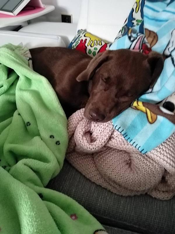 Náš Max měl teplotu. Cesta z veteriny ho zmohla a už zase odpočívá.