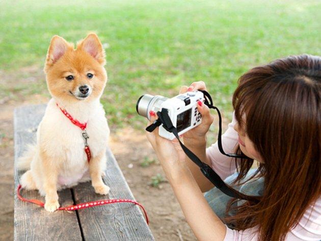 Své zvířecí mazlíčky fotí lidé podle květnového průzkumu ve 12 evropských zemích častěji než partnery.