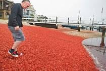 Jindy zlatavé kalifornské pláže se v těchto dnech zabarvily do červena, když se na nich vyrojily tisíce krabů, kteří obyčejně pobývají na mořském dně.