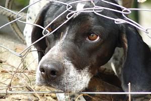 Smutný pes.