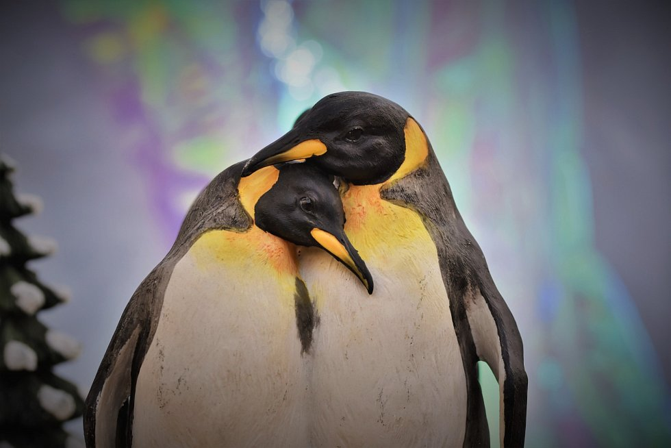 Zamilovaní tučňáci.