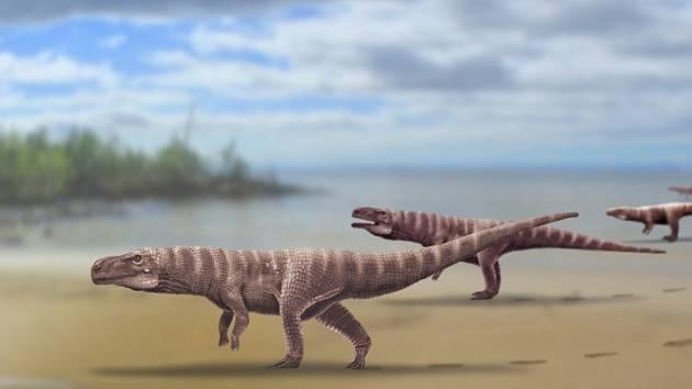 Umělecká rekonstrukce obrovského krokodýlího předka Batrachopus grandis. Stopy naznačují, že se pohyboval jen po zadních