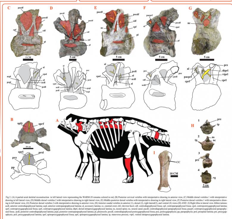 Úlomky, které byly nalezeny na severu Afriky.