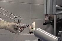 Opičák Arthur ovládá mozkem robotickou ruku.