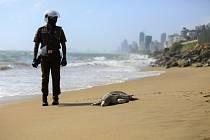 Téměř stovku mrtvých želv s poškozenými hrdly a krunýři, asi desítku uhynulých delfínů a plejtváka obrovského vyplavilo moře na pobřeží Srí Lanky