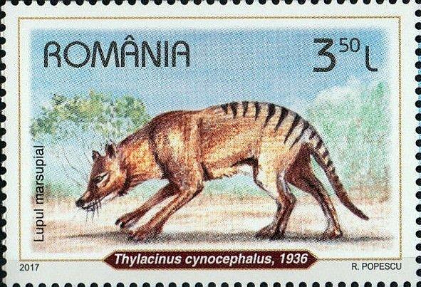 Vakovlk tasmánský na rumunské poštovní známce