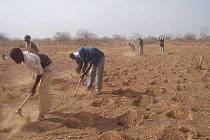 Africké zemědělství, metoda Zai