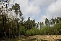 Na okraji Hradeckého lesa nedaleko města Hradec Králové v blízkosti lesního hřbitova vyroste rytířské hradiště.