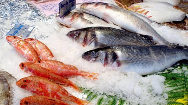 Ryby - ilustrační foto.