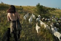 Volná pastva ovcí a koz se vrátila po dlouhé době na jihomoravskou Pálavu. Se stádem vyráží denně na svahy Stolové hory mladá pastýřka Kamila Zavadilová.