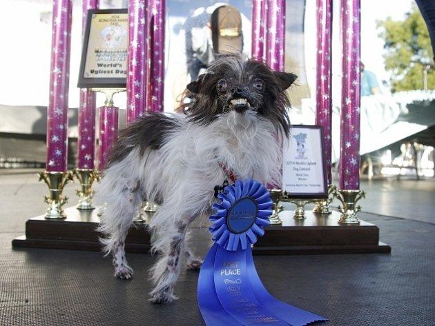 Psí kříženec pojmenovaný Peanut (Burák), který kvůli těžkým popáleninám přišel o oční víčka a pysky, se stal vítězem letošního ročníku soutěže o nejošklivějšího psa.