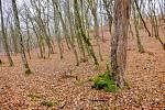 Transylvánský les Hoia Baciu