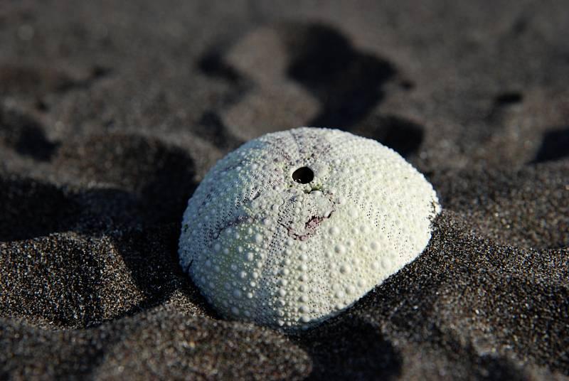 Lidé hlásí z tichomořského pobřeží Kamčatky zranění od bodlin mrtvých mořských ježků. Po čase zůstávají z těchto živočichů jen vybělené skořápky