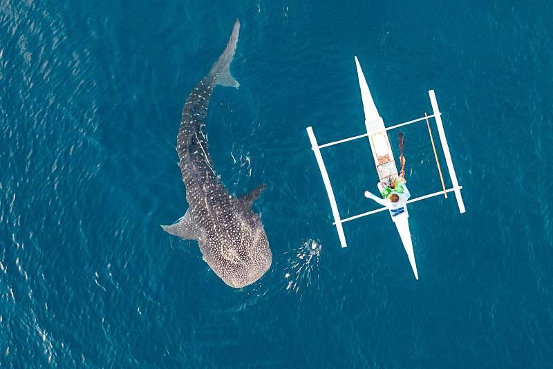 Například na Maledivách jsou tito žraloci oblíbenou atrakcí, ale omezení určená k jejich ochraně jsou často porušována.