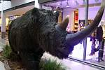 Model nosorožce srstnatého v nákupním středisku