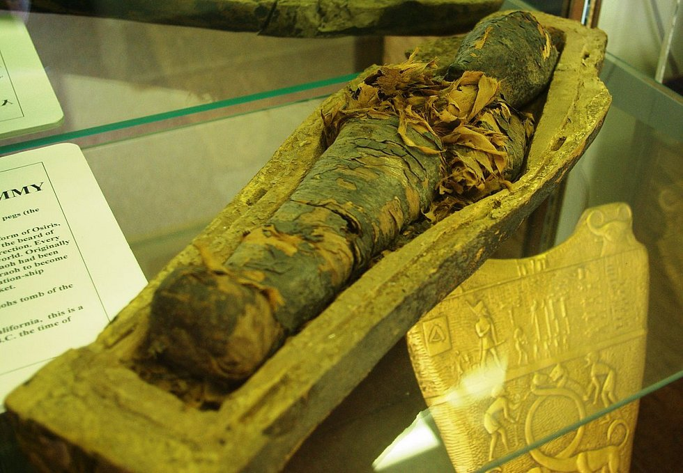 Pakliže zavítáte do Archeologického muzea v Oregonu, uvidíte právě tuto mumii.