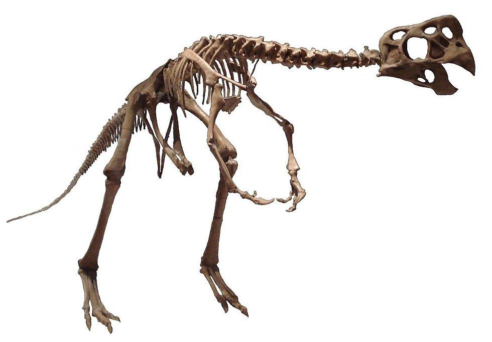 Kostra oviraptora