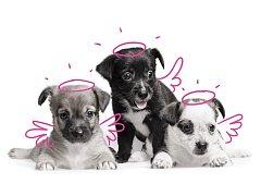 PetExpert nabízí první online pojištění psů a koček na českém trhu