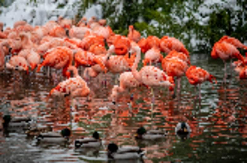 Plameňáci ve svém rybníčku.