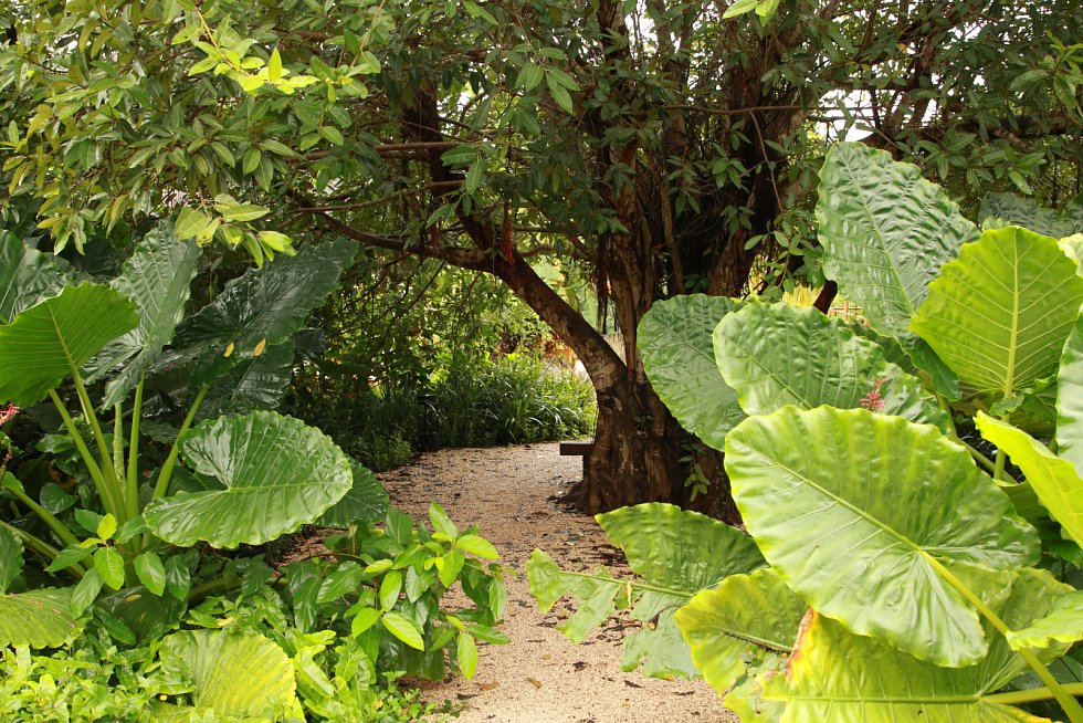 Výsadba v prázdninovém resortu Zuri na Zanzibaru připomíná menší džungli