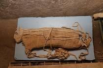 Staří Egypťané nemumifikovali jen vlastní zemřelé, ale i zvířata. K nedávným nálezům patří mumie pěti lvíčat